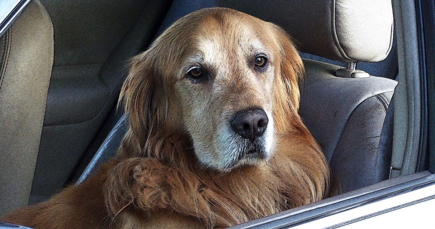 Forget Backup Cameras: World's Best Dog Helps Park A Car In Viral Video